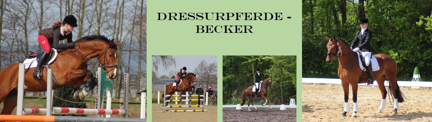 Dressurpferde Becker logo
